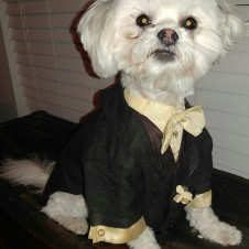 Tux for dog or cat!
